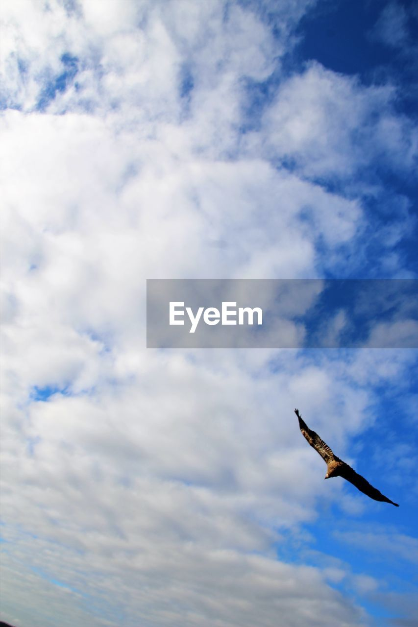 animal themes, bird, animal, vertebrate, animal wildlife, cloud - sky, animals in the wild, one animal, low angle view, sky, flying, spread wings, mid-air, no people, nature, day, outdoors, beauty in nature, motion, zoology, seagull