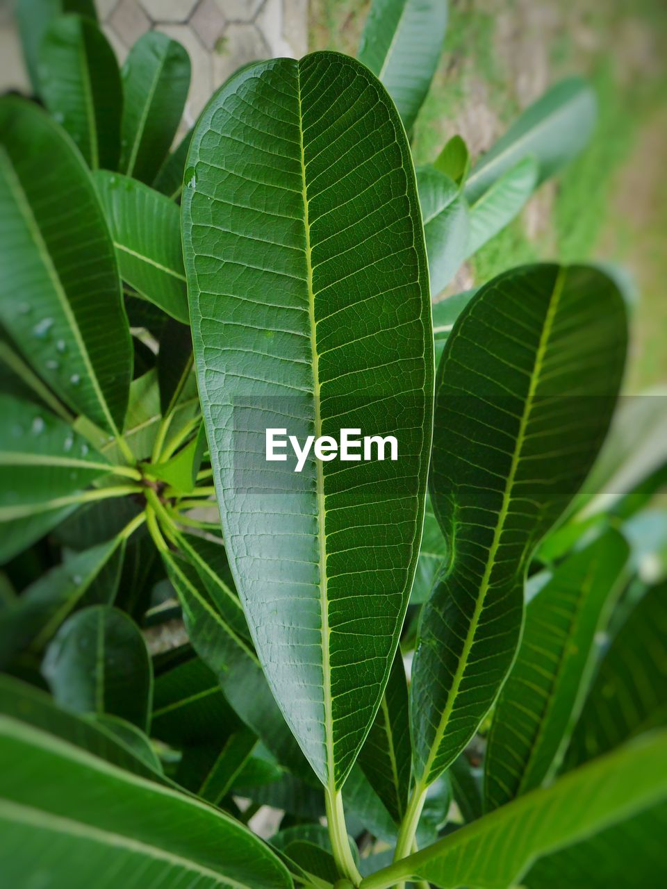 leaf, plant part, green color, plant, growth, close-up, nature, beauty in nature, leaf vein, day, no people, outdoors, leaves, focus on foreground, selective focus, freshness, botany, natural pattern, high angle view, tranquility