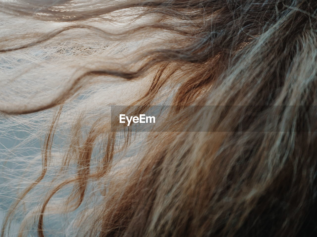 Close-Up Of Woman Hair