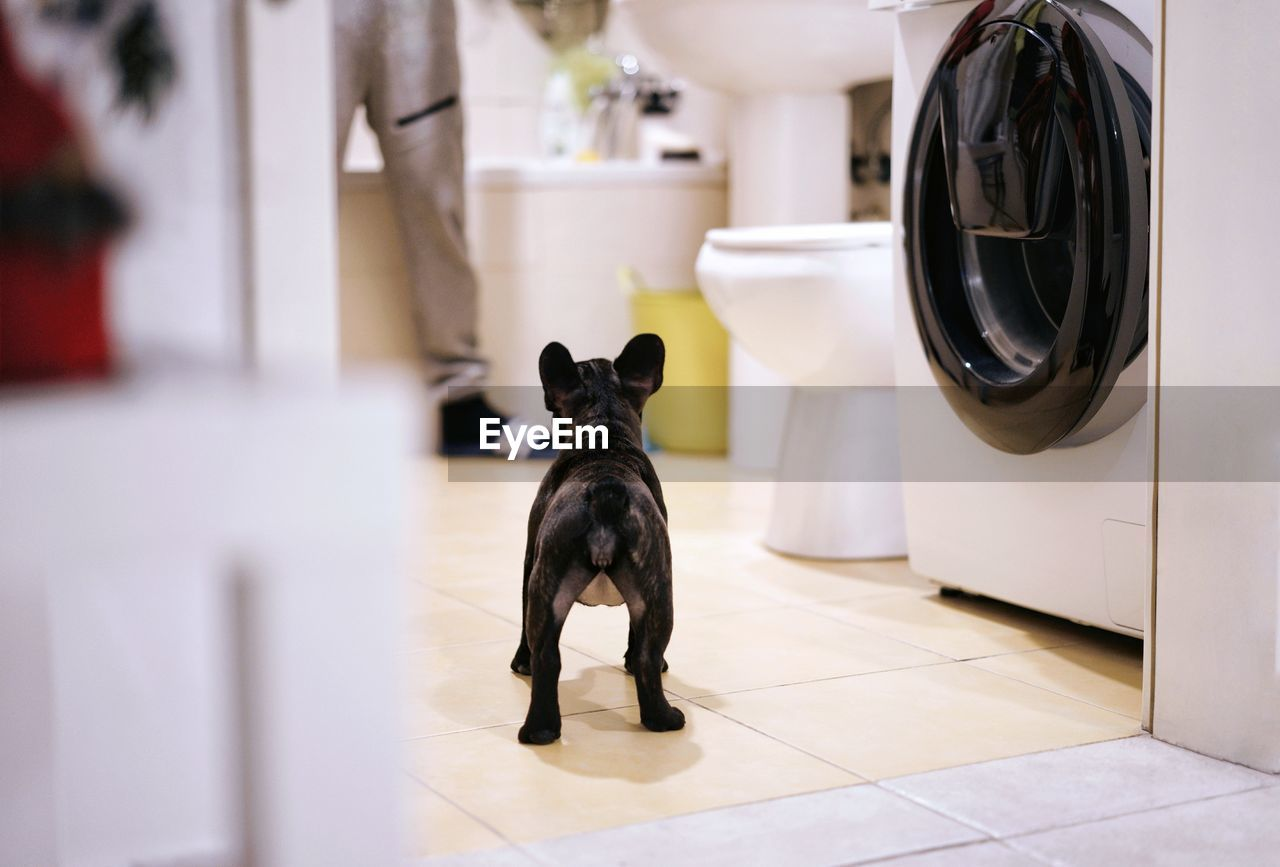 domestic, pets, domestic animals, mammal, animal, dog, animal themes, canine, one animal, no people, indoors, vertebrate, flooring, washing machine, focus on foreground, black color, home interior, appliance, tile, household equipment, tiled floor