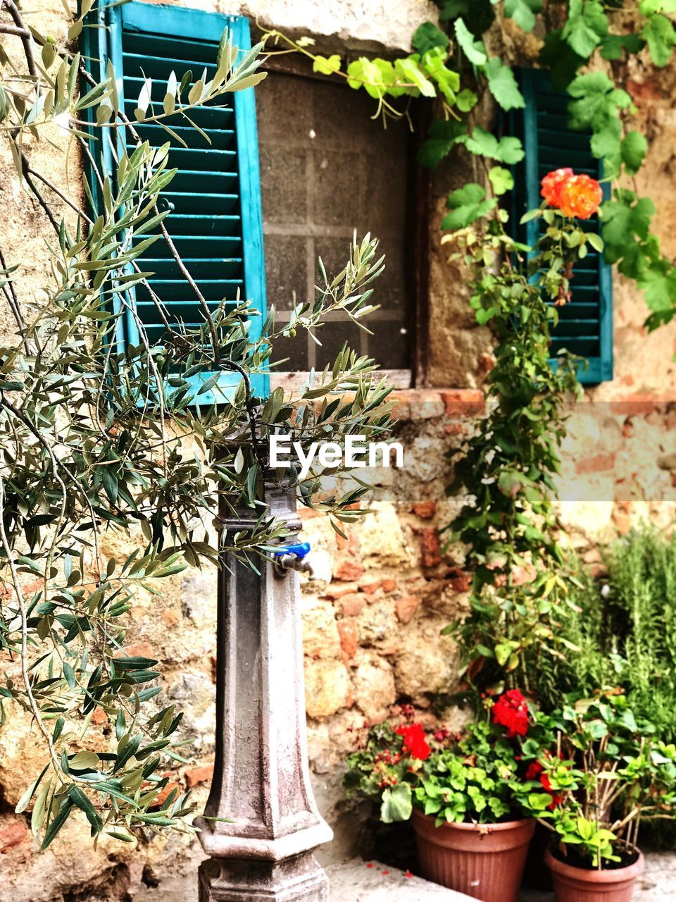 plant, growth, flower, flowering plant, built structure, architecture, nature, building exterior, potted plant, day, no people, building, house, front or back yard, outdoors, leaf, window, plant part, fragility, green color, flower pot, gardening, houseplant