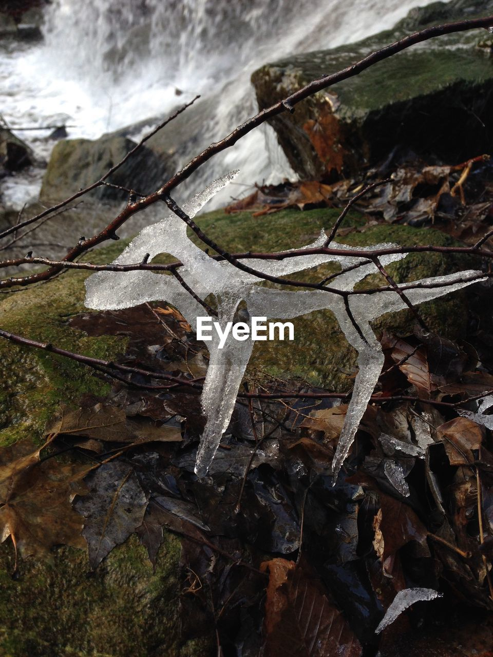 nature, no people, outdoors, water, day, cold temperature, high angle view, winter, leaf, close-up, beauty in nature, dead tree, animal themes
