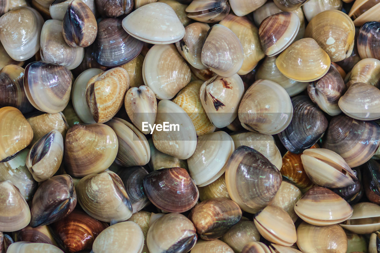 full frame, backgrounds, large group of objects, abundance, food and drink, wellbeing, freshness, still life, healthy eating, no people, food, close-up, shell, for sale, day, choice, indoors, high angle view, seafood, market