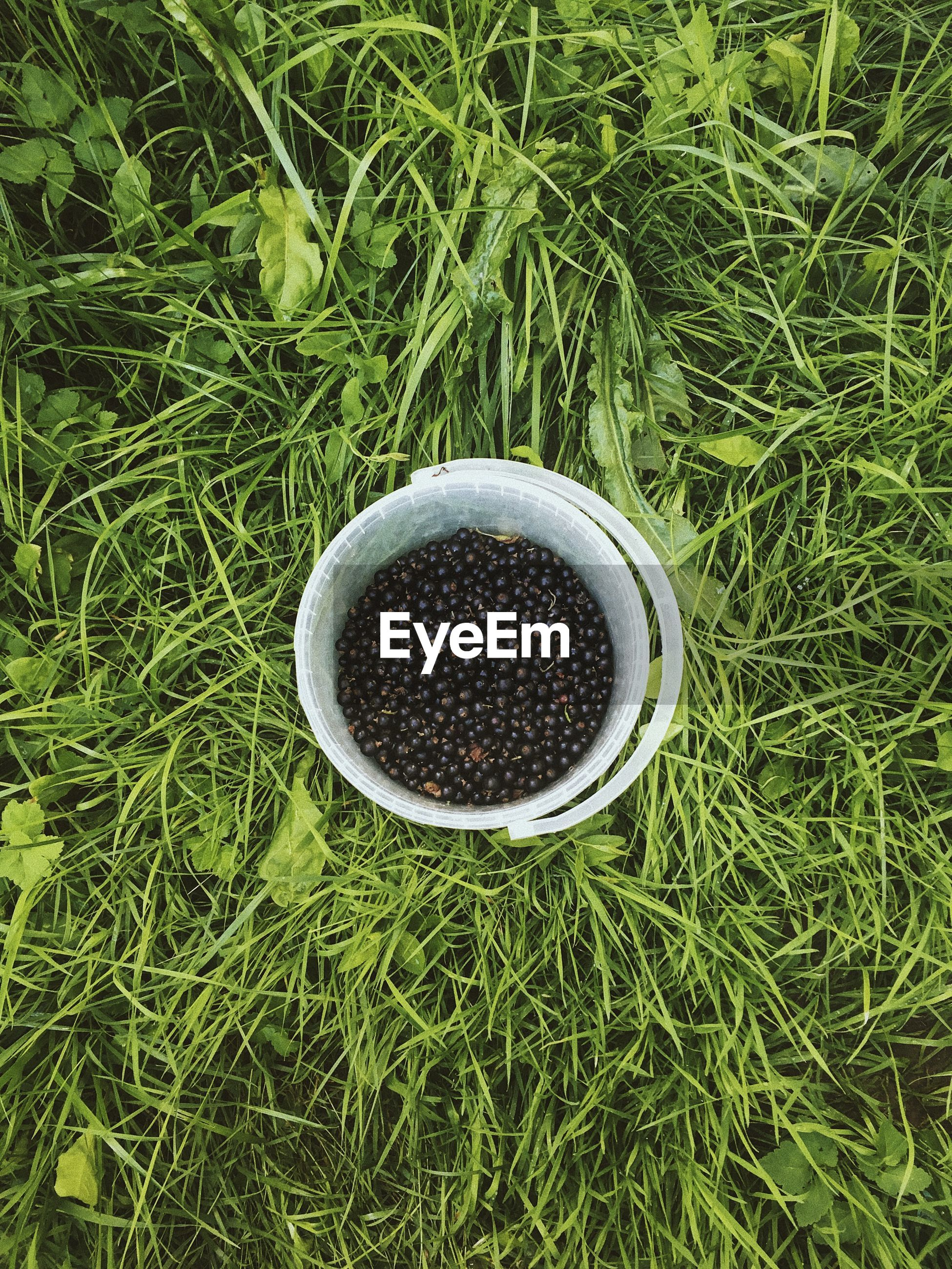 HIGH ANGLE VIEW OF COFFEE IN CUP ON GRASS