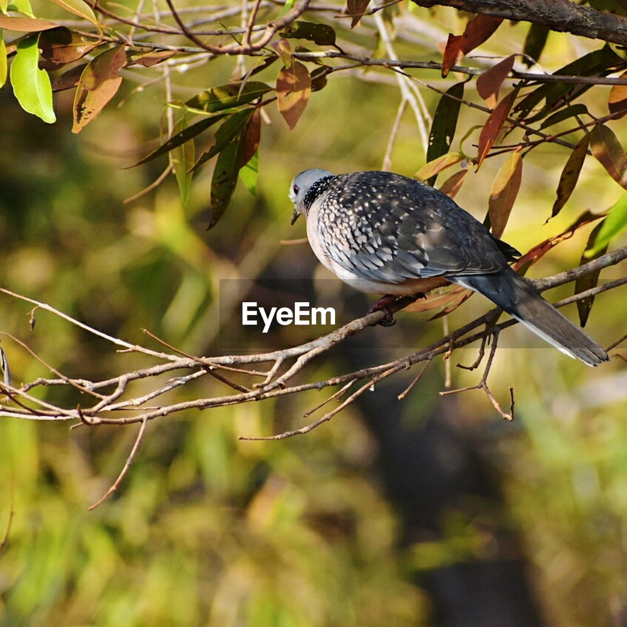 bird, one animal, perching, animals in the wild, animal themes, branch, animal wildlife, no people, focus on foreground, tree, outdoors, day, full length, nature