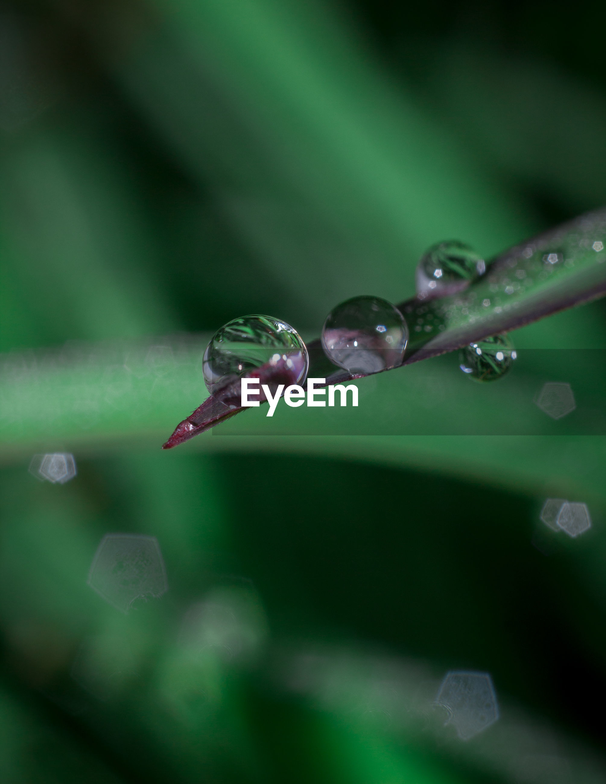 CLOSE-UP OF WATER DROPS ON GREEN PLANT