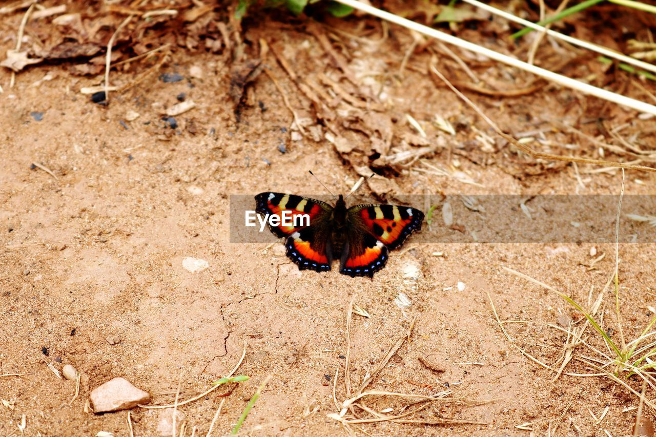 animal themes, animal, insect, animals in the wild, one animal, animal wildlife, invertebrate, butterfly - insect, no people, nature, day, land, high angle view, animal wing, field, beauty in nature, butterfly, close-up, animal markings, outdoors
