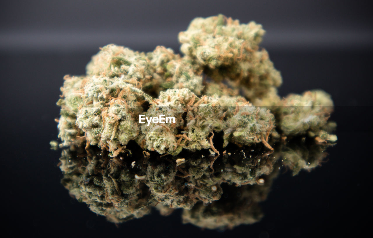 close-up, selective focus, food and drink, marijuana - herbal cannabis, food, indoors, plant, no people, cannabis plant, healthcare and medicine, narcotic, medicine, studio shot, herbal medicine, herb, alternative medicine, black background, medical cannabis, focus on foreground, solution