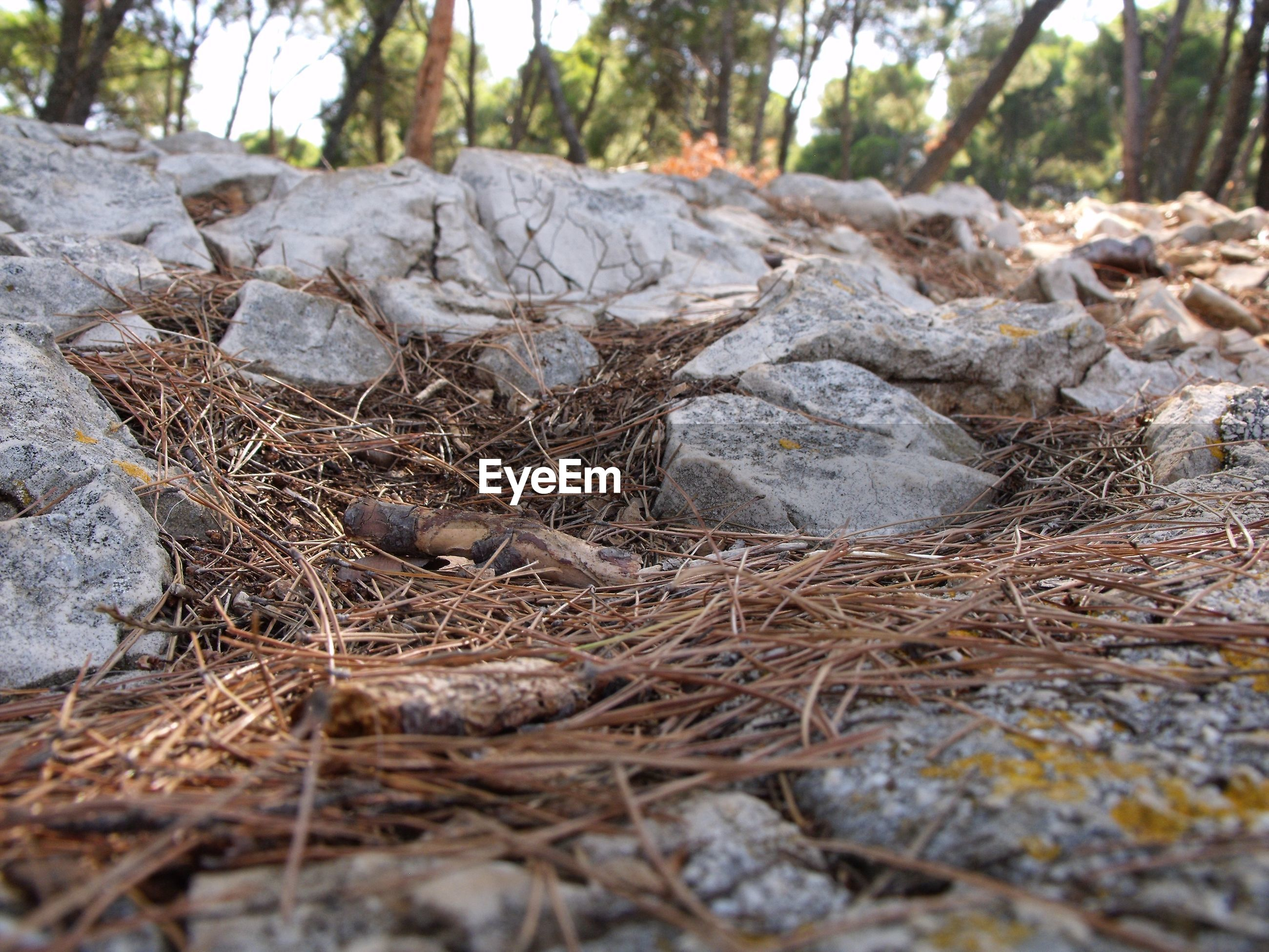 Dry twigs and rocks on field