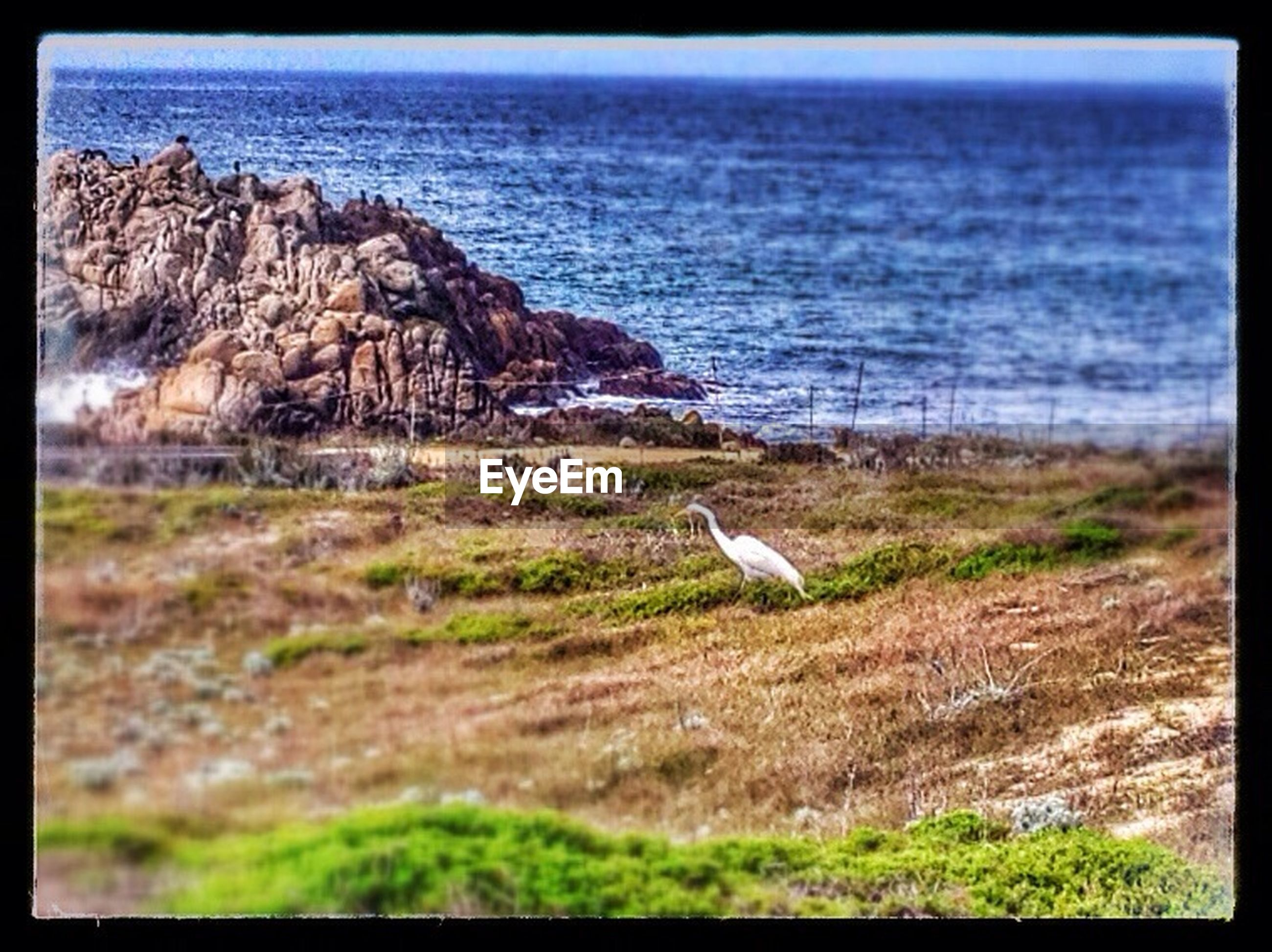 transfer print, auto post production filter, water, tranquility, grass, tranquil scene, sea, nature, beauty in nature, scenics, plant, bird, day, rock - object, horizon over water, outdoors, rock, no people, wildlife, lake