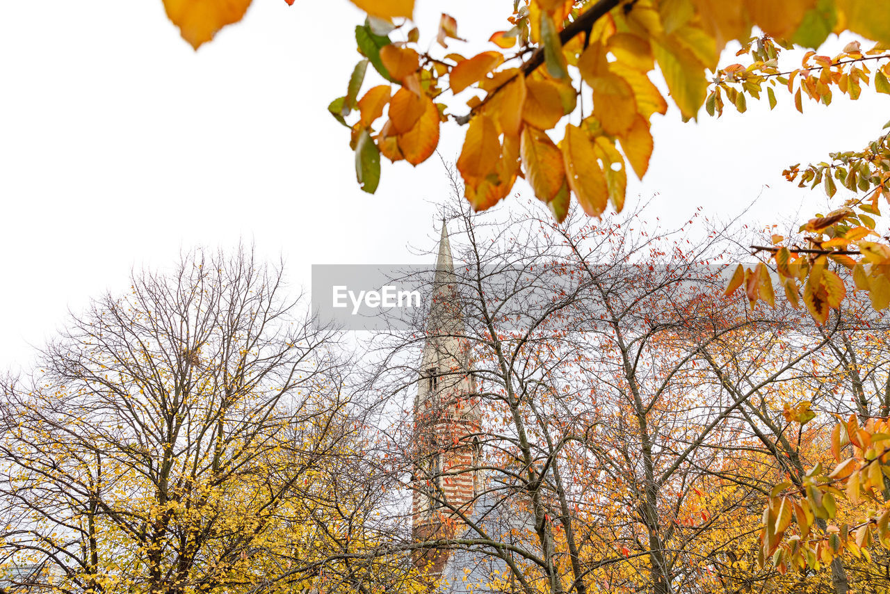 tree, autumn, plant, branch, sky, change, low angle view, growth, nature, leaf, day, plant part, beauty in nature, no people, orange color, outdoors, tranquility, clear sky, yellow, scenics - nature, fall, leaves