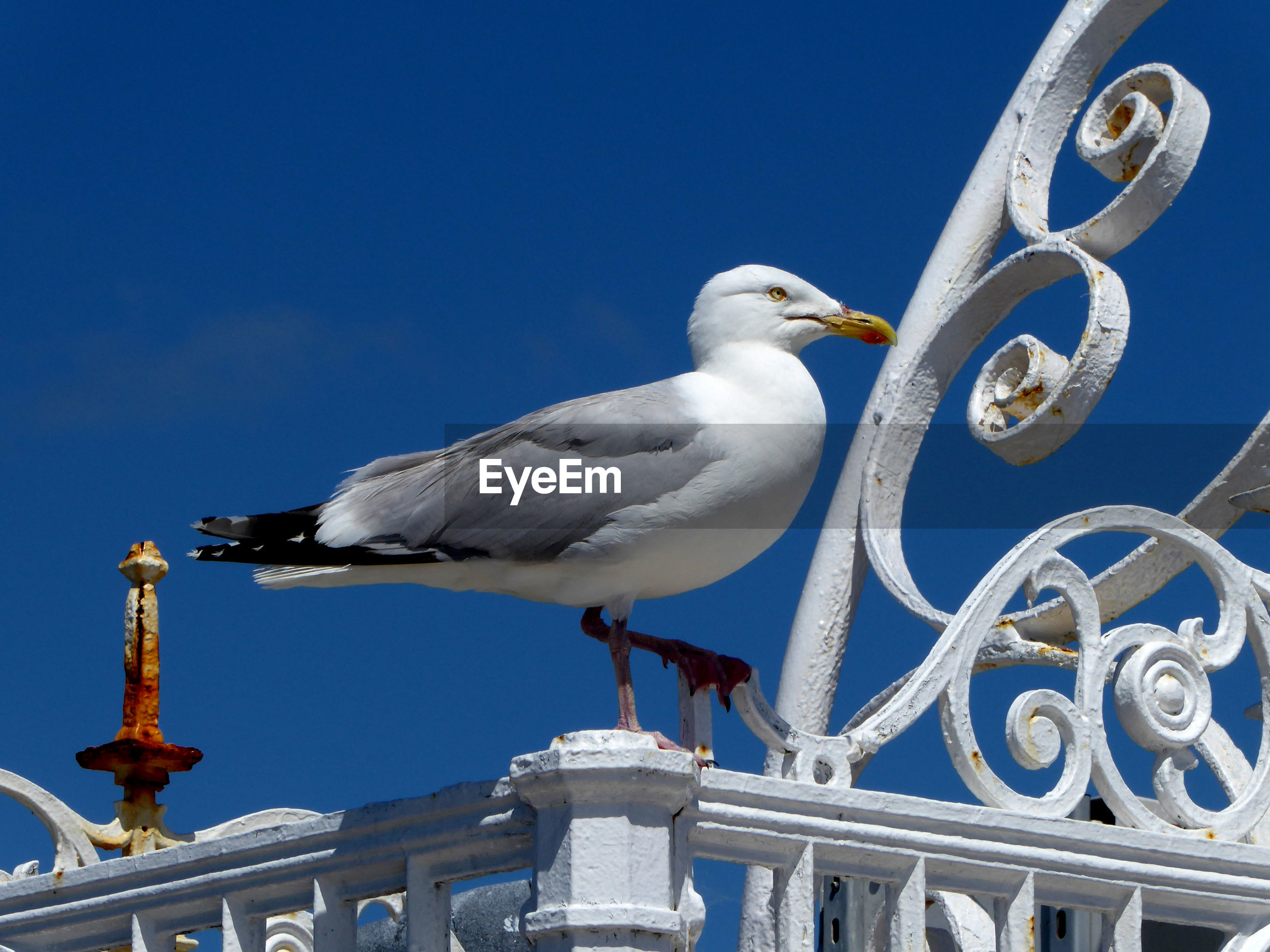 LOW ANGLE VIEW OF SEAGULL PERCHING ON METALLIC STRUCTURE AGAINST SKY