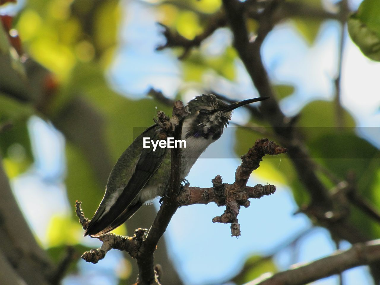 Low angle view of hummingbird perching on branch