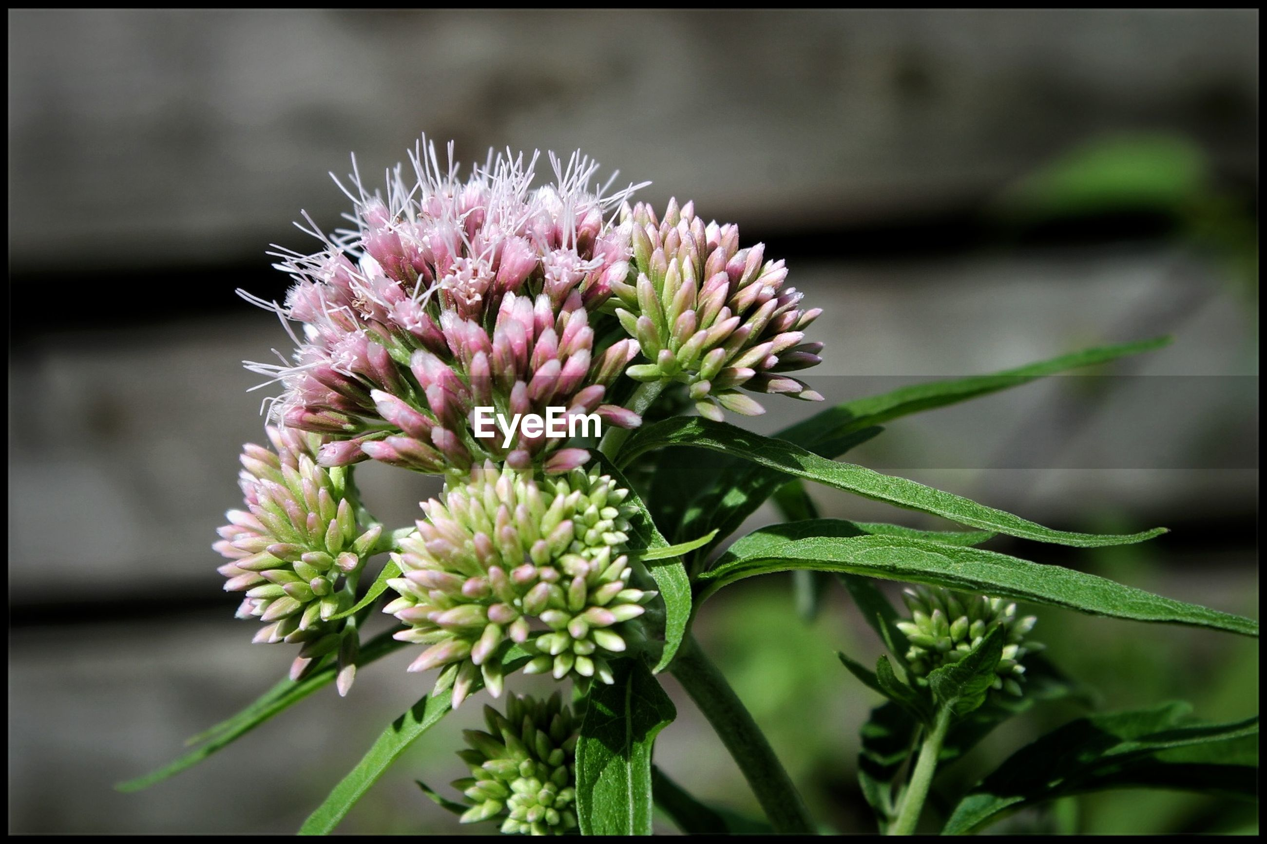 flower, close-up, nature, fragility, focus on foreground, growth, plant, beauty in nature, no people, freshness, outdoors, flower head, day