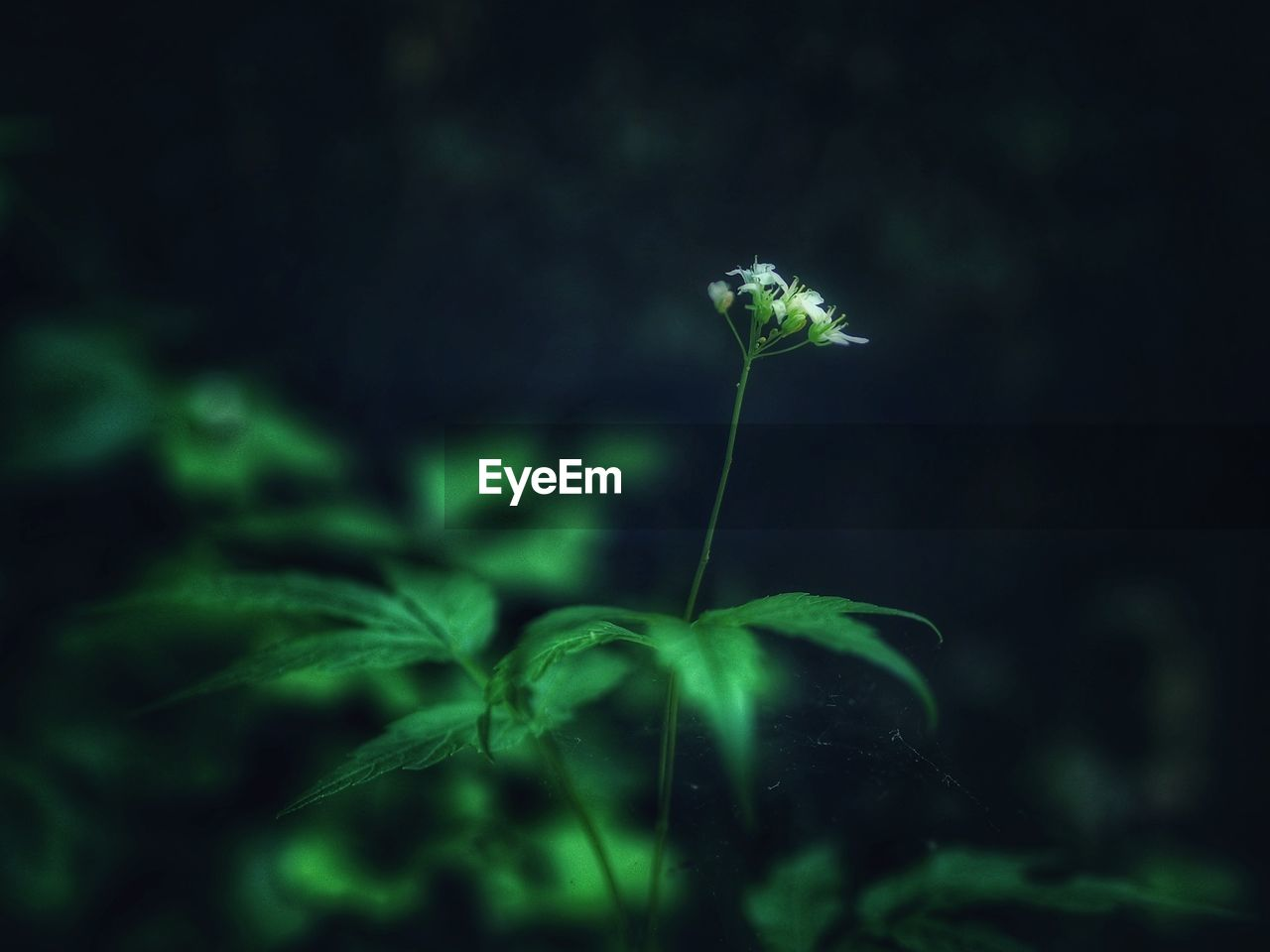 plant, growth, freshness, beauty in nature, flower, fragility, close-up, vulnerability, flowering plant, green color, nature, selective focus, no people, plant part, leaf, land, focus on foreground, plant stem, day, outdoors, flower head, small, dandelion seed