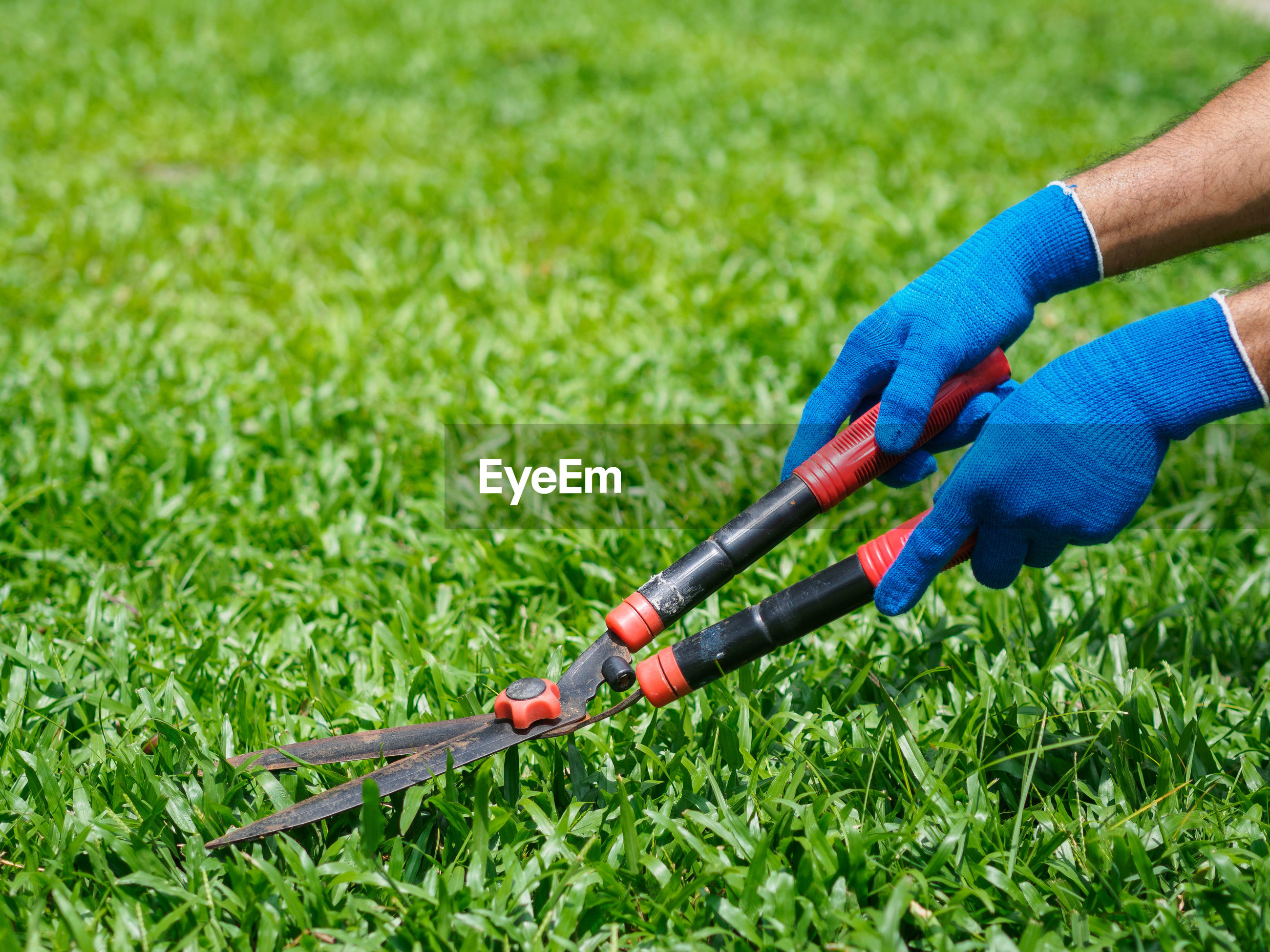 Cropped hands of man cutting grass on land