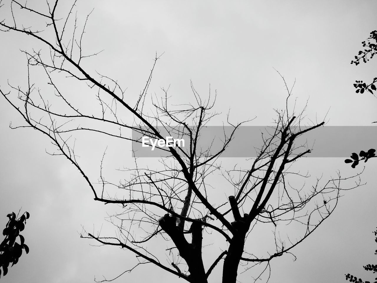 nature, low angle view, branch, bare tree, outdoors, tree, sky, flying, no people, day, beauty in nature, bird, animal themes