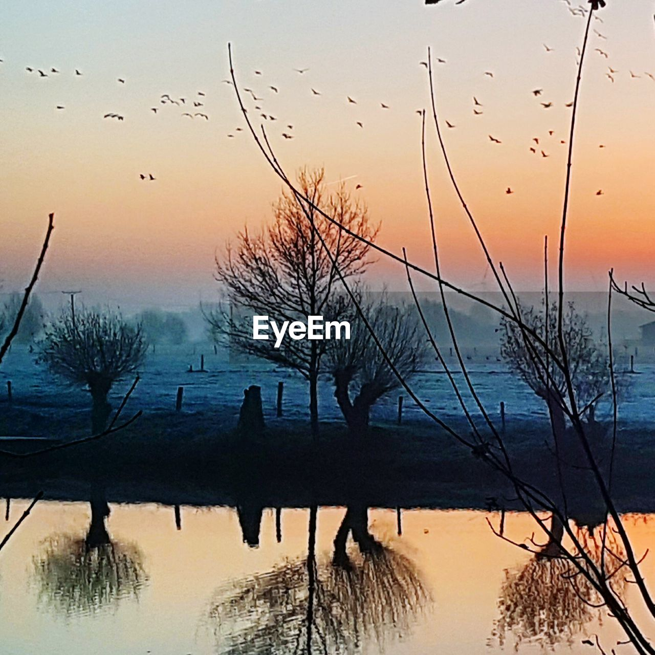 bird, sunset, nature, flying, silhouette, beauty in nature, flock of birds, water, large group of animals, tree, sky, animals in the wild, scenics, animal themes, tranquility, migrating, no people, outdoors, bare tree, day