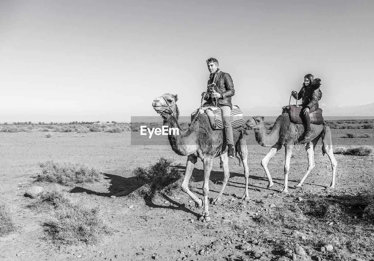 land, sky, mammal, nature, clear sky, desert, domestic animals, camel, environment, landscape, sitting, working animal, day, people, full length, domestic, copy space, pets, outdoors, climate, arid climate
