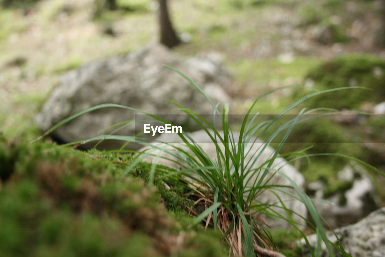 selective focus, nature, grass, no people, growth, close-up, day, outdoors, beauty in nature, plant