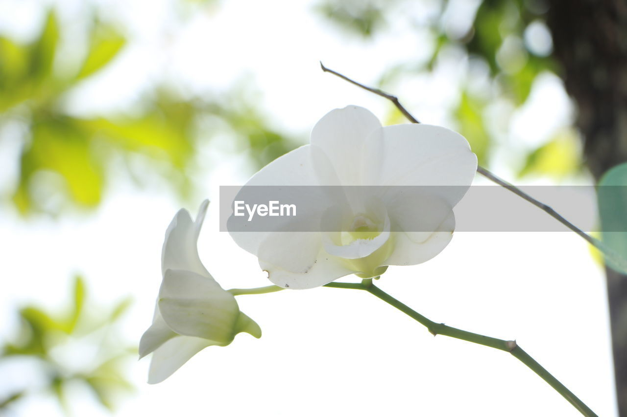 plant, flowering plant, flower, beauty in nature, growth, vulnerability, white color, fragility, freshness, petal, close-up, focus on foreground, inflorescence, flower head, nature, no people, day, low angle view, outdoors, botany