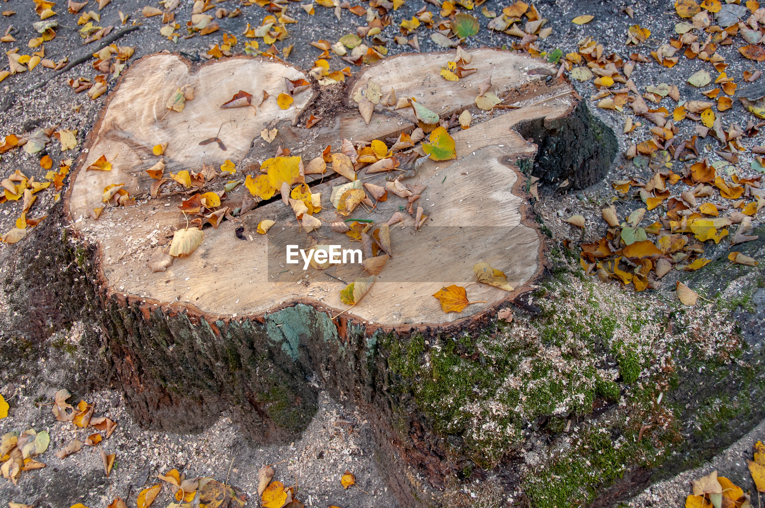 HIGH ANGLE VIEW OF LICHEN ON ROCK IN FOREST