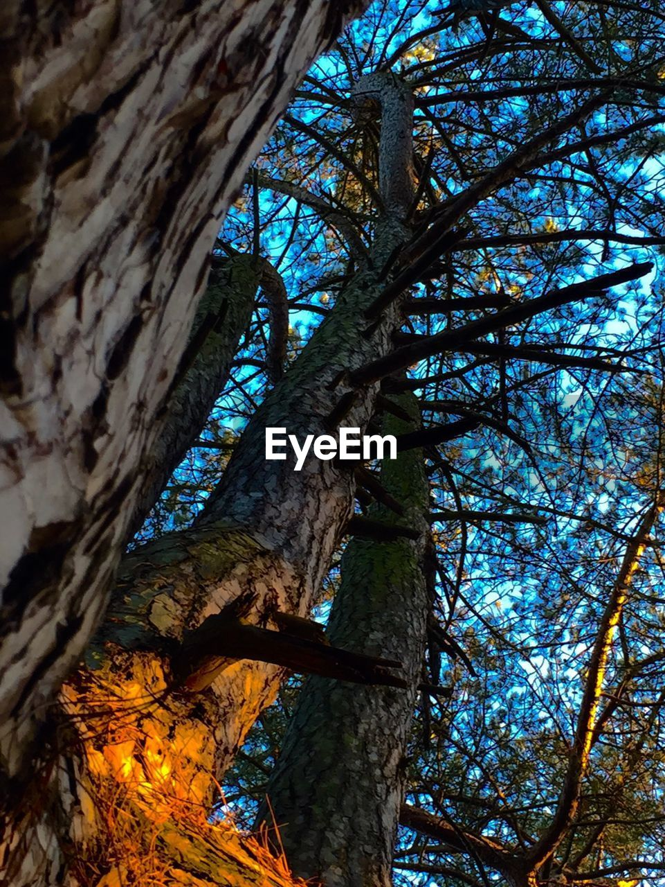 tree, tree trunk, branch, nature, growth, low angle view, day, no people, beauty in nature, outdoors, sky, close-up