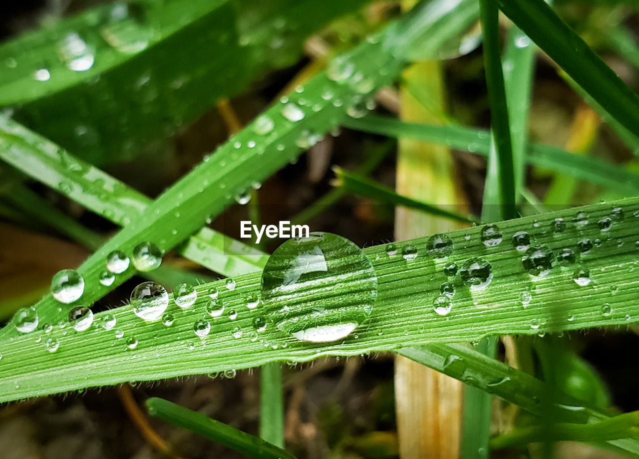 green color, plant, wet, growth, drop, water, close-up, nature, plant part, blade of grass, day, leaf, beauty in nature, no people, grass, focus on foreground, outdoors, freshness, rain, dew, raindrop, rainy season, purity