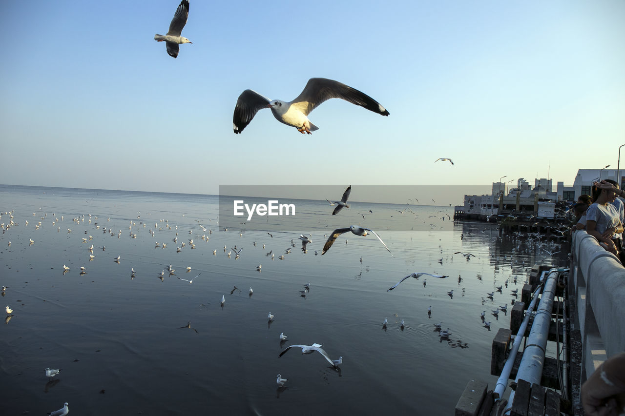 flying, bird, animals in the wild, mid-air, spread wings, water, sea, animal wildlife, motion, nature, large group of animals, seagull, clear sky, scenics, outdoors, beauty in nature, horizon over water, day, real people, flock of birds, sky, men, travel destinations, large group of people, beach, architecture