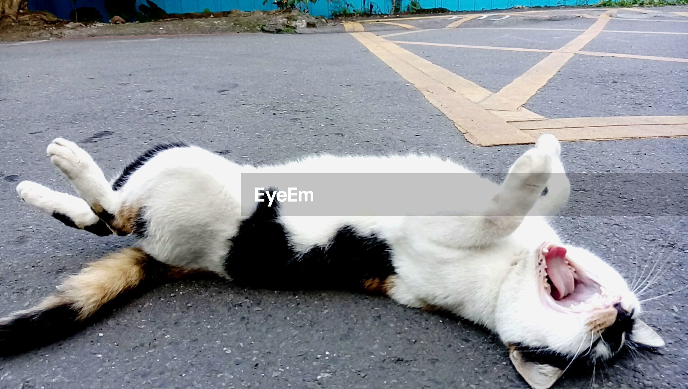 High angle view of cat relaxing on road