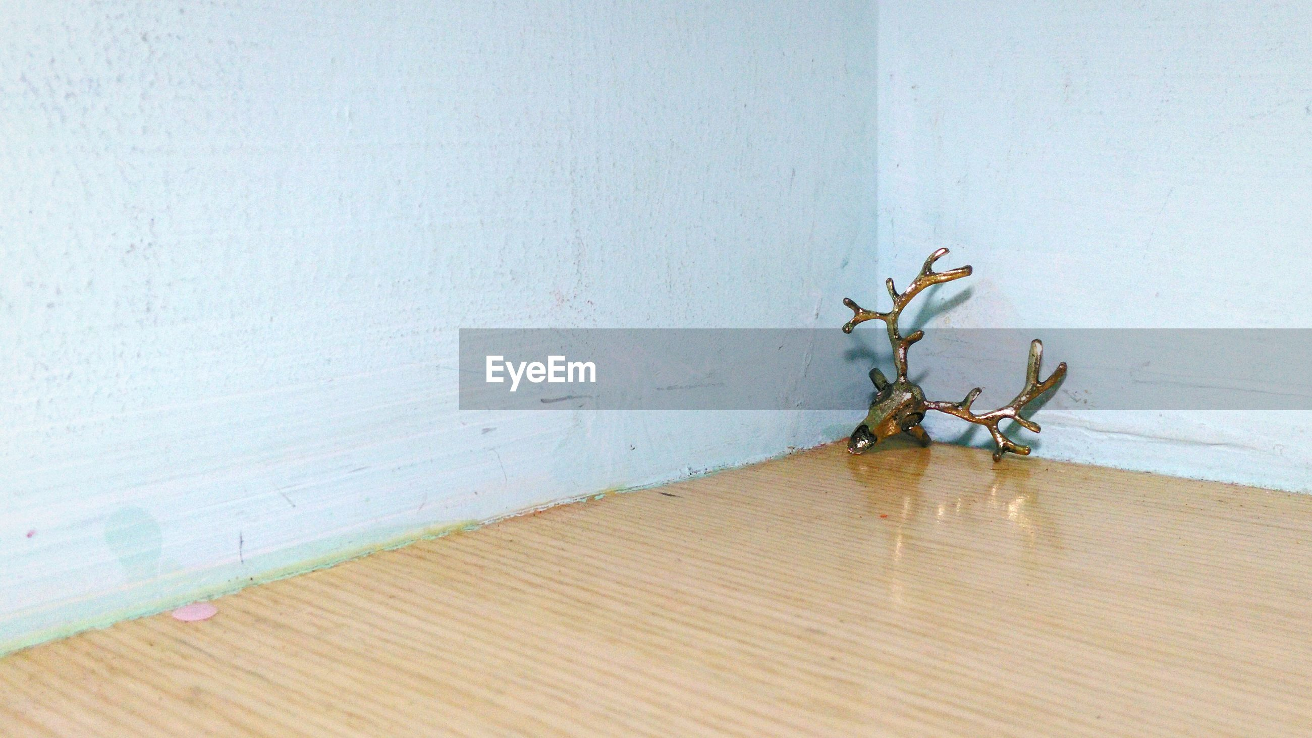 wall - building feature, wall, wood - material, indoors, plant, built structure, shadow, no people, copy space, wooden, growth, stem, architecture, day, close-up, nature, leaf, sunlight, wood, home interior