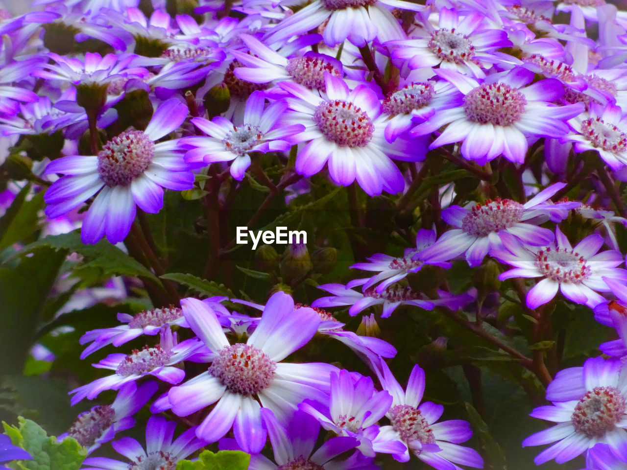 flower, flowering plant, vulnerability, fragility, freshness, beauty in nature, petal, plant, close-up, growth, purple, flower head, inflorescence, nature, no people, pollen, day, outdoors, full frame, high angle view