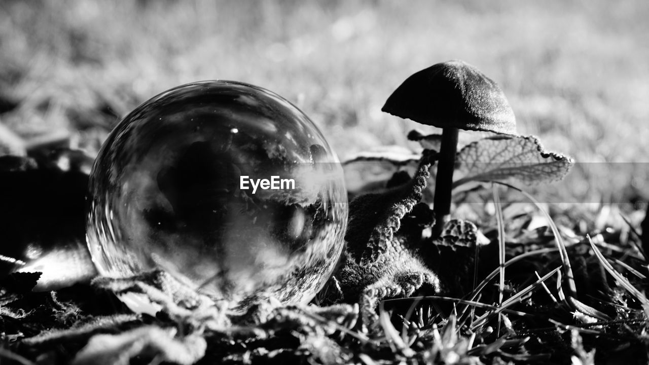 close-up, selective focus, plant, nature, field, no people, land, mushroom, fungus, growth, vegetable, vulnerability, fragility, day, outdoors, sphere, food, beauty in nature, toadstool, focus on foreground, surface level