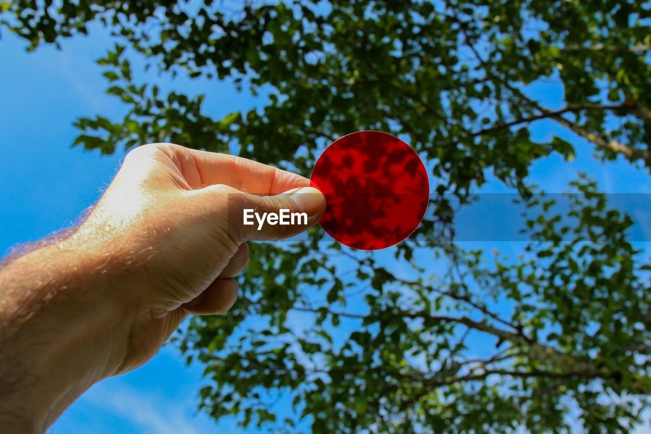 Low Angle View Of Hand Holding Red Glass Against Tree