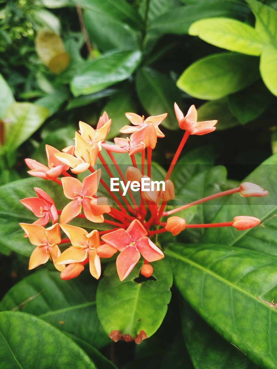 leaf, orange color, growth, petal, beauty in nature, freshness, plant, nature, day, outdoors, fragility, no people, flower, close-up, blooming, flower head