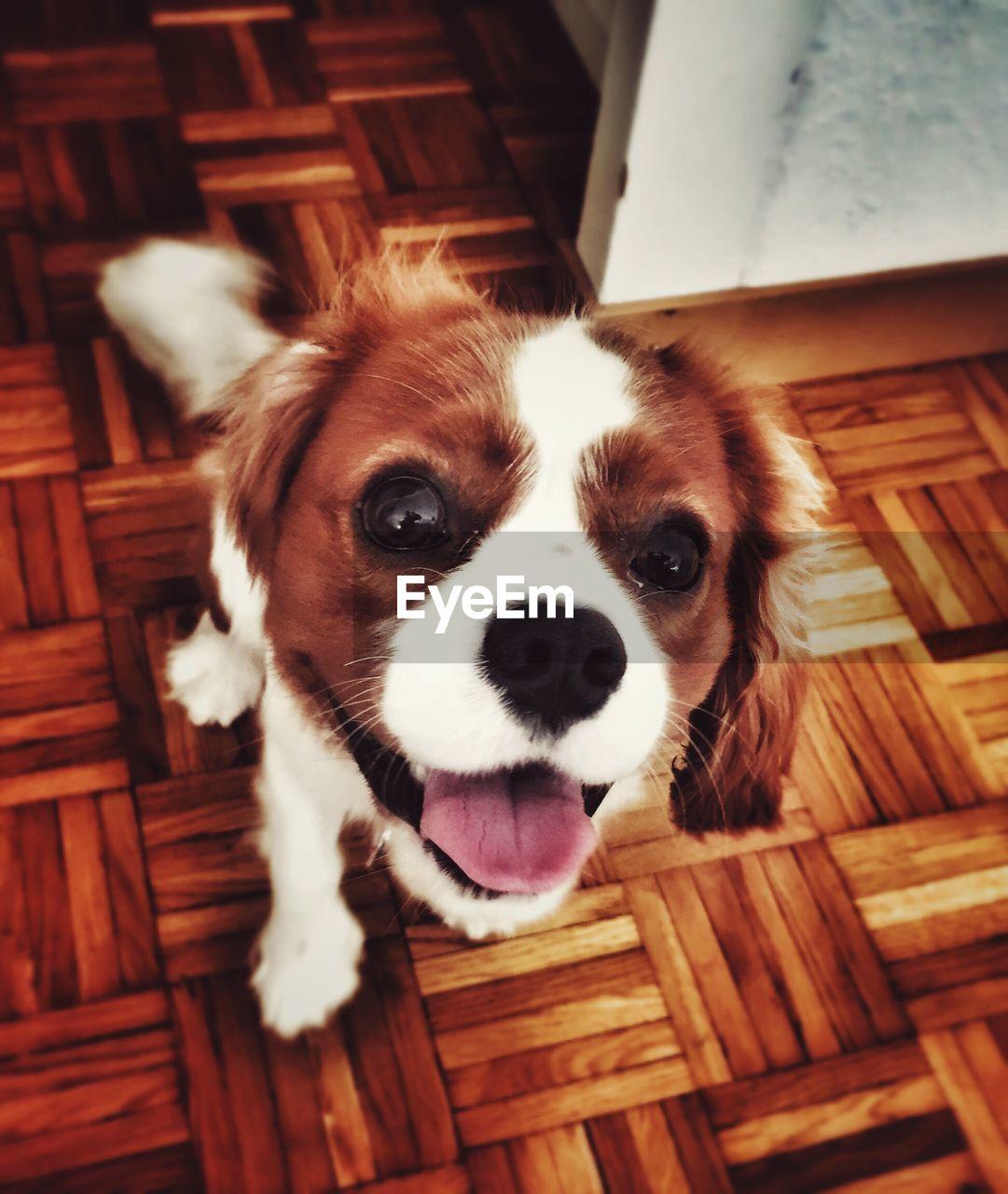 Portrait of puppy on wooden floor