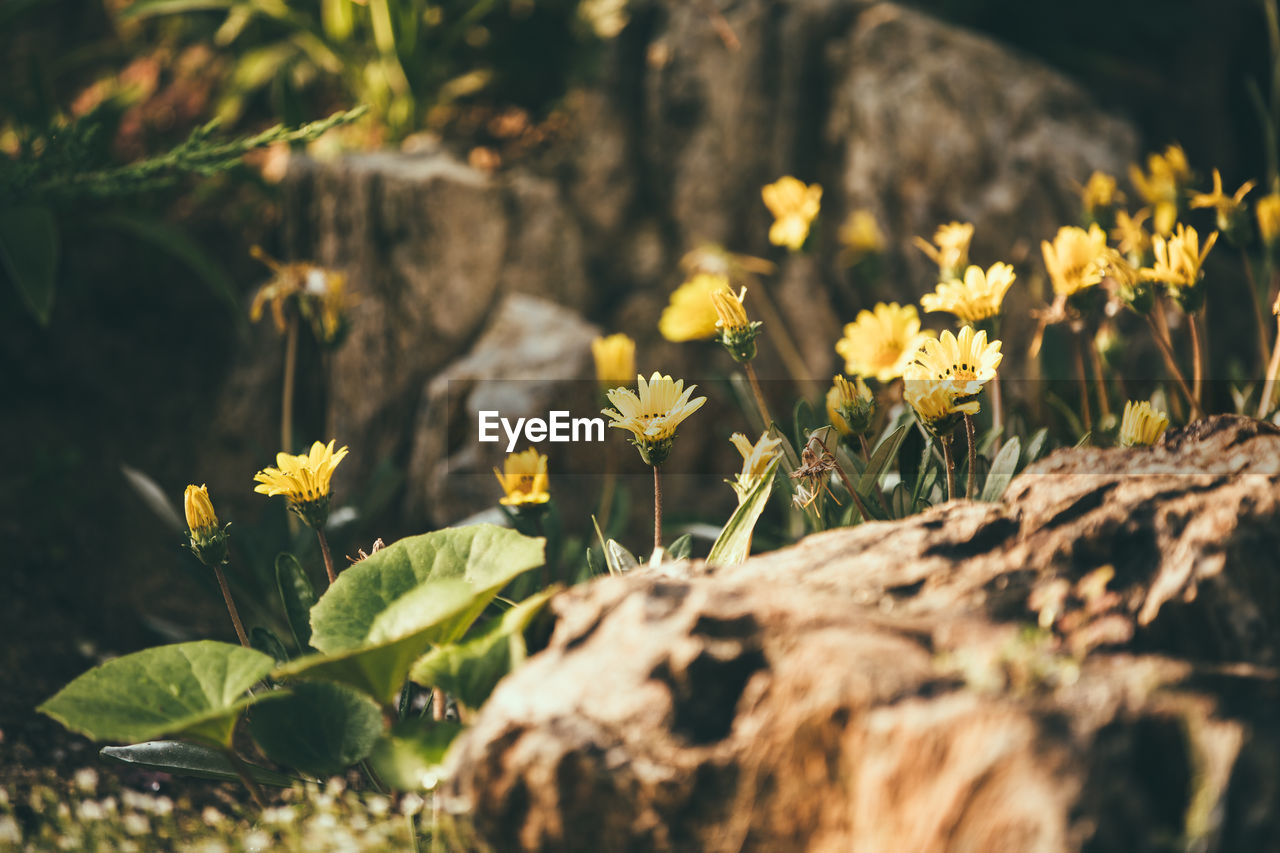 flower, nature, growth, plant, fragility, beauty in nature, freshness, leaf, no people, outdoors, petal, blooming, flower head, day, close-up
