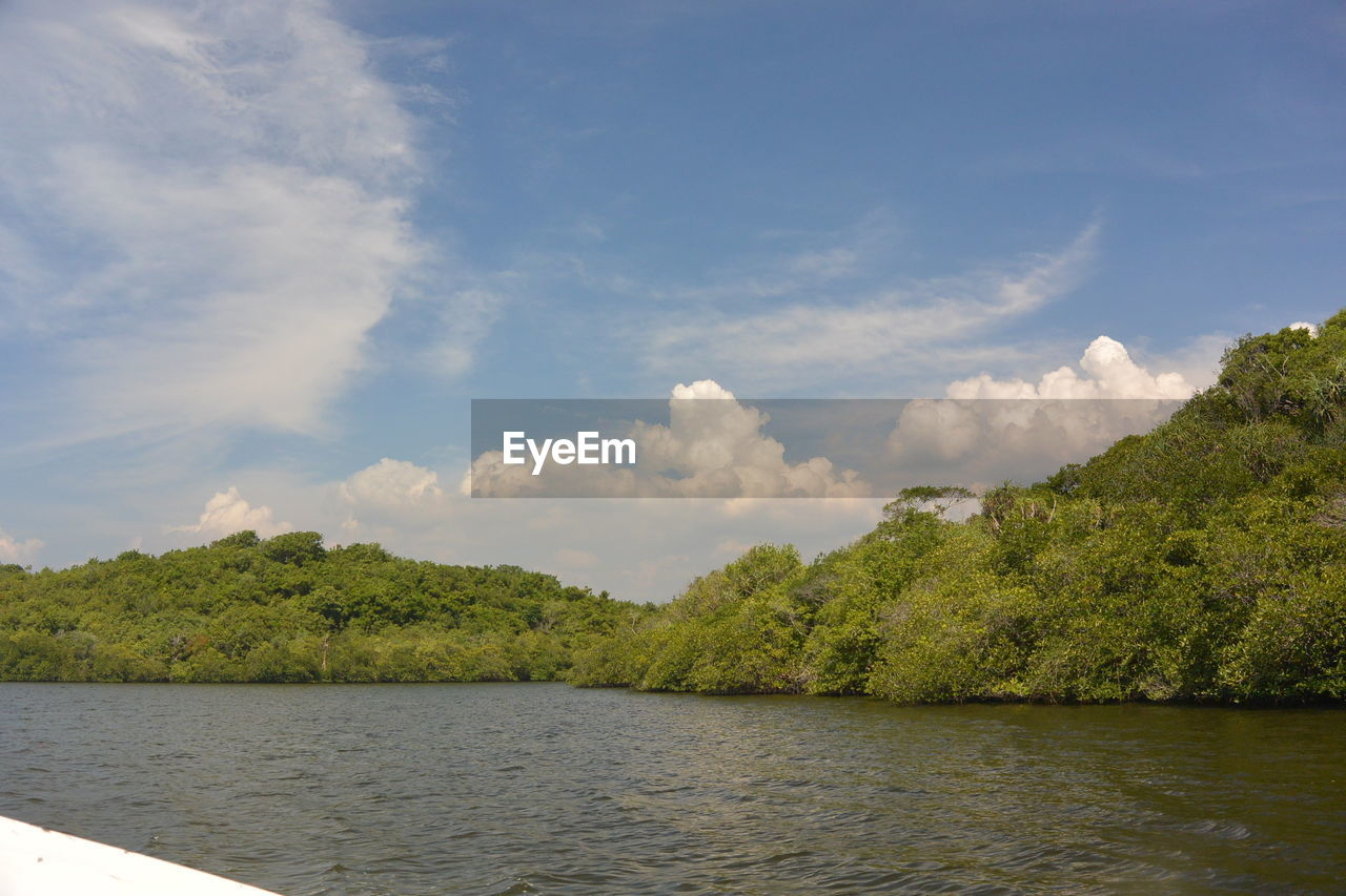 sky, cloud - sky, plant, tree, water, beauty in nature, tranquility, tranquil scene, scenics - nature, nature, day, waterfront, no people, non-urban scene, green color, lake, growth, outdoors