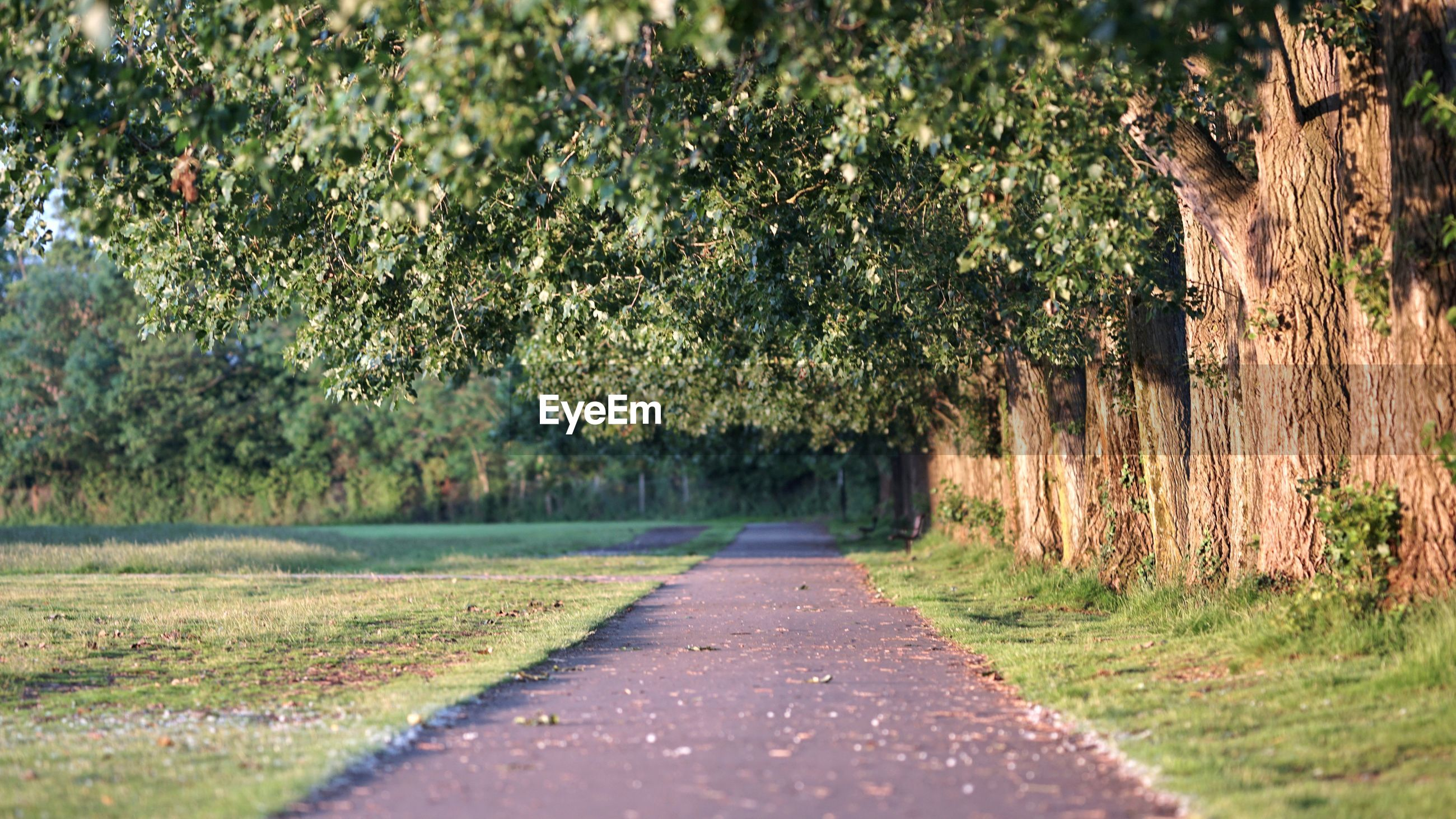 ROAD BY TREES ON FIELD