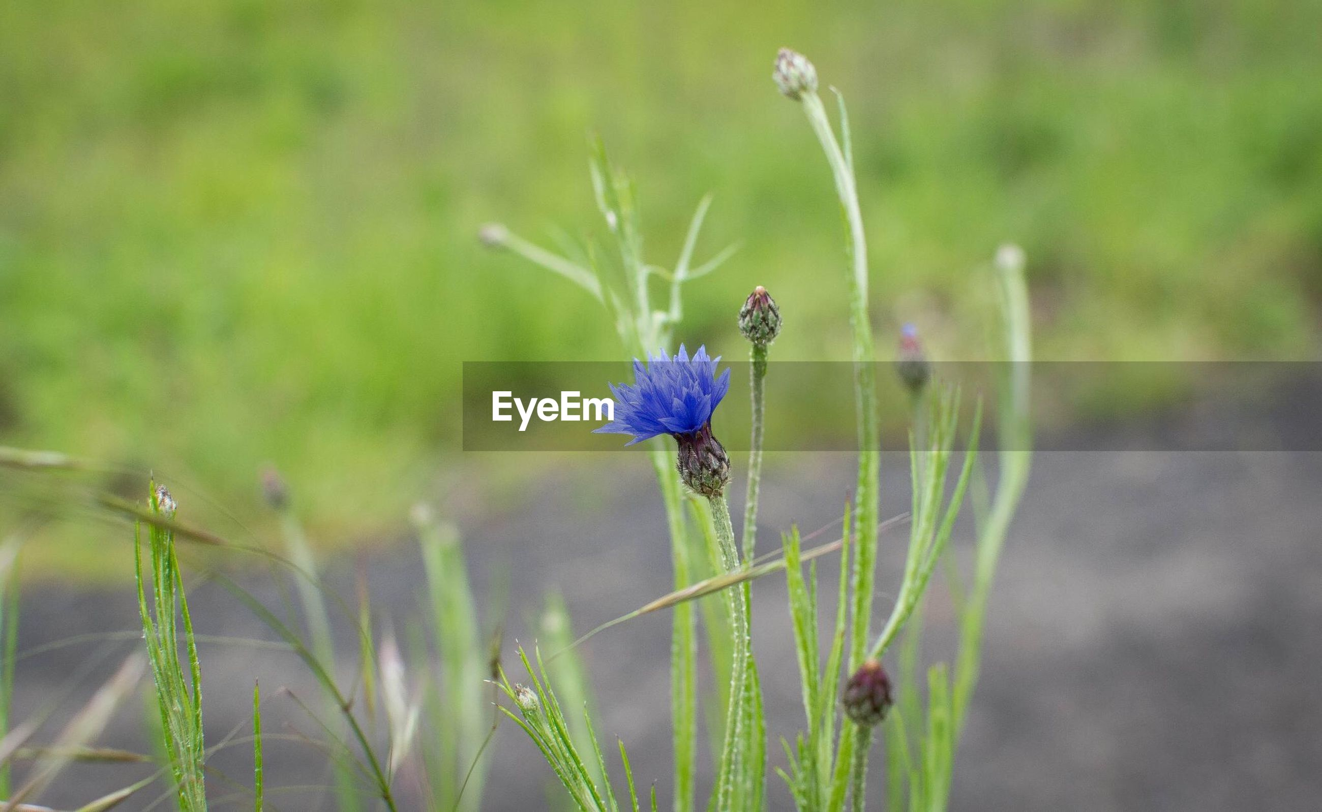 flower, animal themes, one animal, insect, animals in the wild, wildlife, fragility, focus on foreground, growth, freshness, plant, close-up, beauty in nature, nature, purple, pollination, stem, selective focus, flower head, symbiotic relationship
