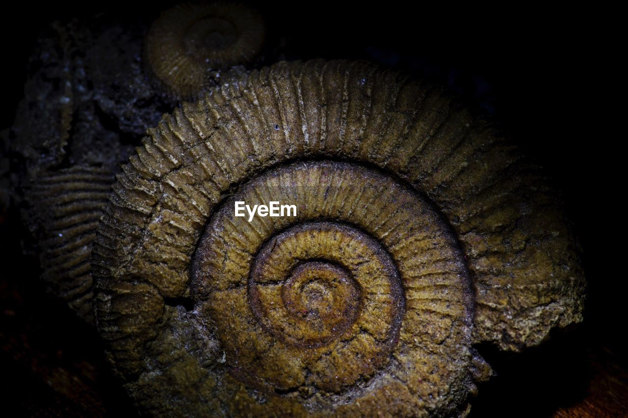 spiral, fossil, no people, close-up, nature, animal themes, sea life, night, outdoors
