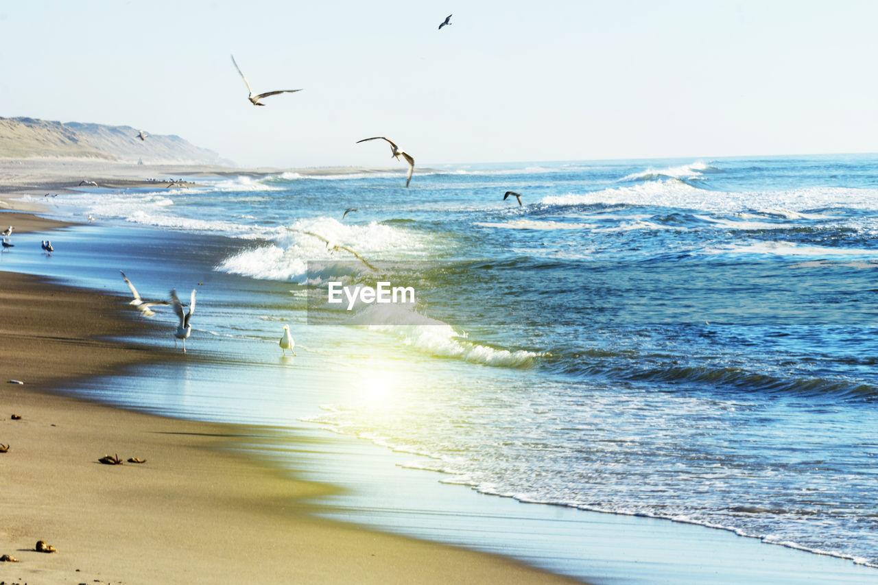 sea, water, beach, land, horizon over water, horizon, sky, beauty in nature, wave, scenics - nature, motion, animal wildlife, animal, animal themes, nature, animals in the wild, sand, flying, vertebrate, no people