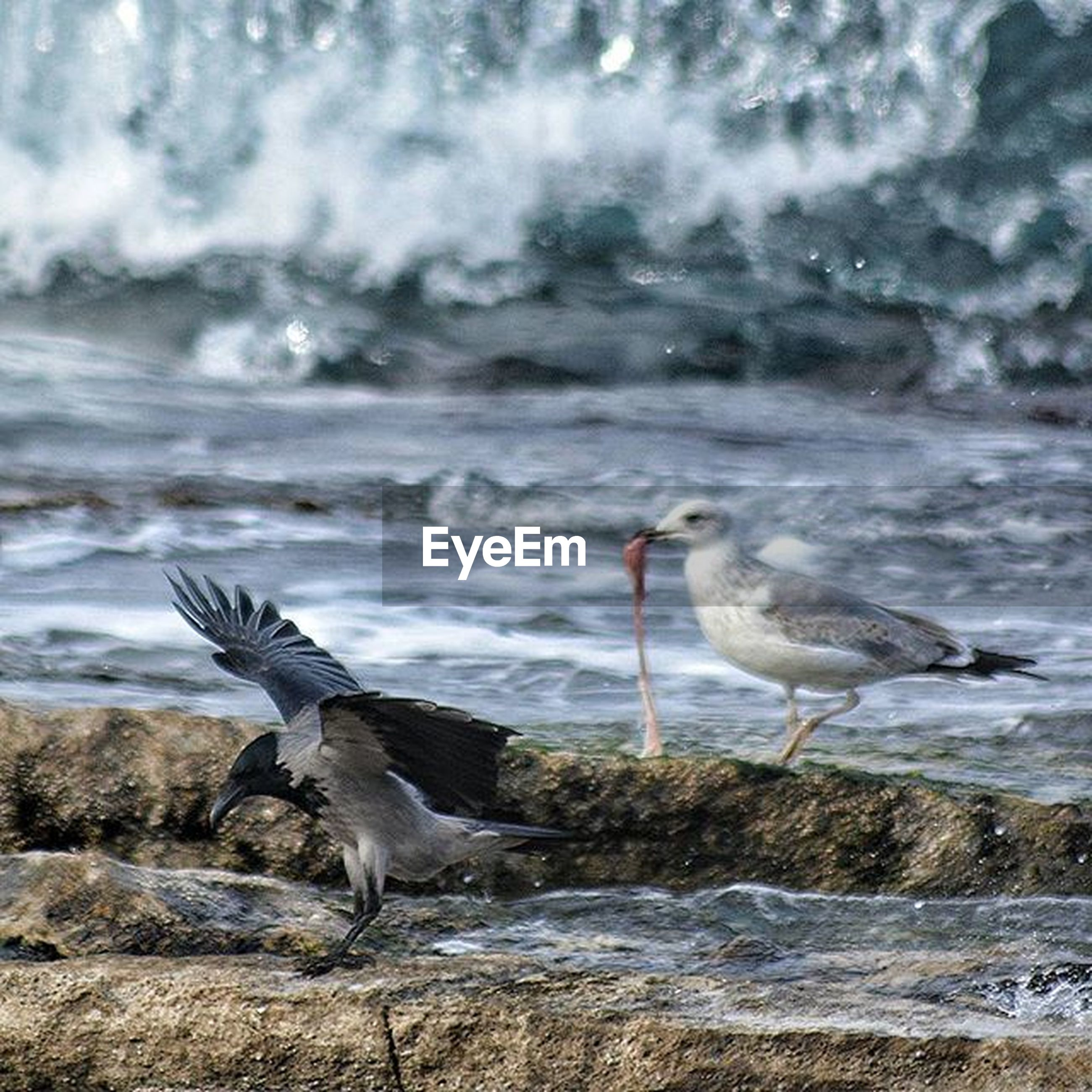 animal themes, bird, animals in the wild, wildlife, water, seagull, sky, one animal, nature, spread wings, cloud - sky, full length, motion, two animals, beauty in nature, flying, side view, cloudy, no people, outdoors