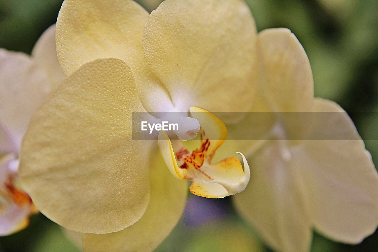 flowering plant, vulnerability, fragility, flower, petal, beauty in nature, freshness, inflorescence, plant, flower head, close-up, growth, pollen, orchid, focus on foreground, nature, selective focus, day, no people, outdoors