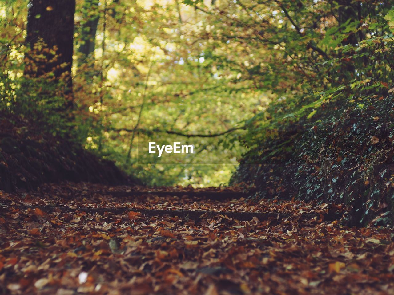 tree, plant, plant part, leaf, land, nature, autumn, day, change, forest, no people, selective focus, tranquility, growth, beauty in nature, outdoors, field, falling, branch, tree trunk, leaves, surface level