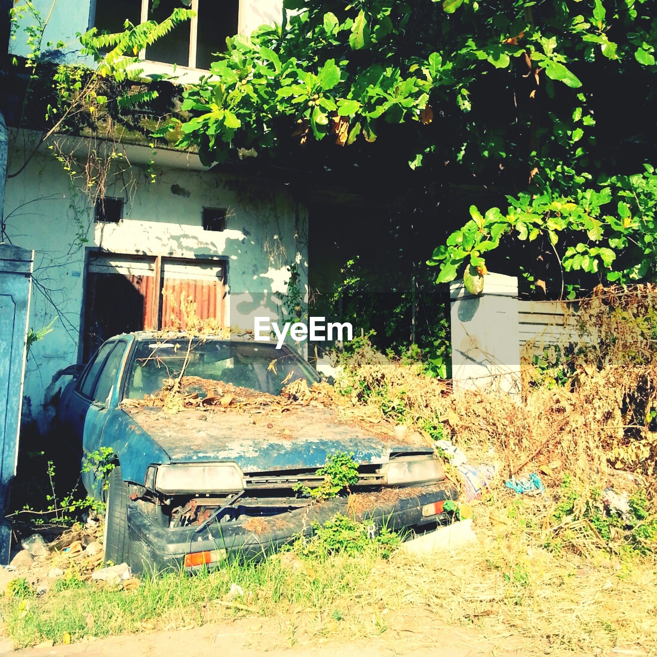 Abandoned car in yard