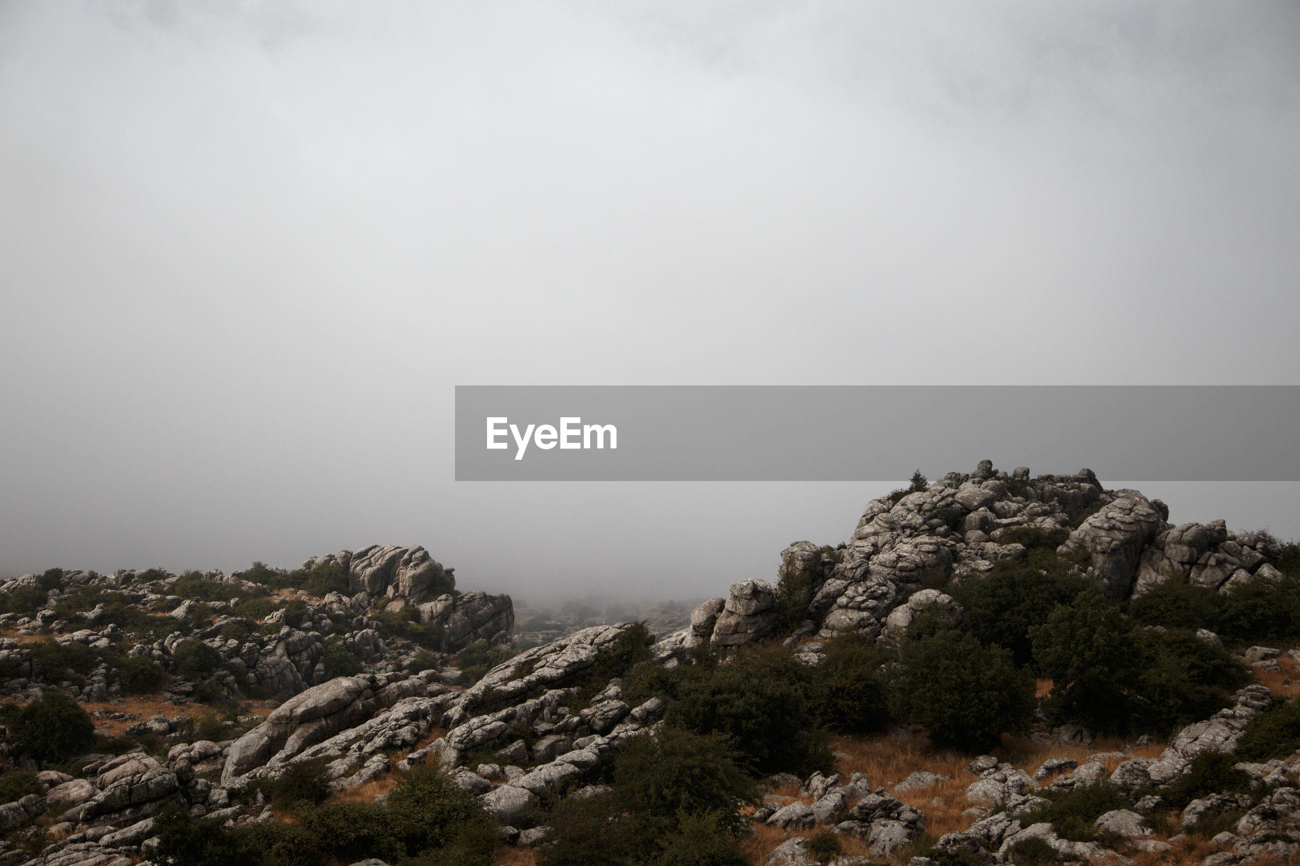 TREES ON ROCKY MOUNTAIN AGAINST SKY