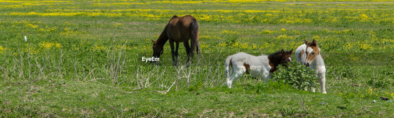 animal, mammal, animal themes, domestic animals, domestic, grass, horse, livestock, field, plant, group of animals, pets, land, animal wildlife, vertebrate, two animals, nature, no people, green color, standing, pony, herbivorous, outdoors