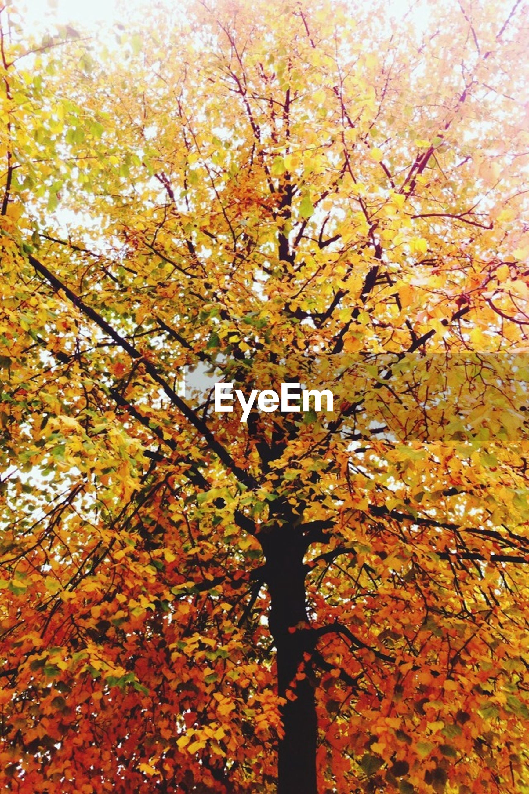 tree, branch, autumn, change, growth, low angle view, beauty in nature, yellow, season, nature, tranquility, leaf, sky, day, scenics, orange color, outdoors, flower, no people, park - man made space