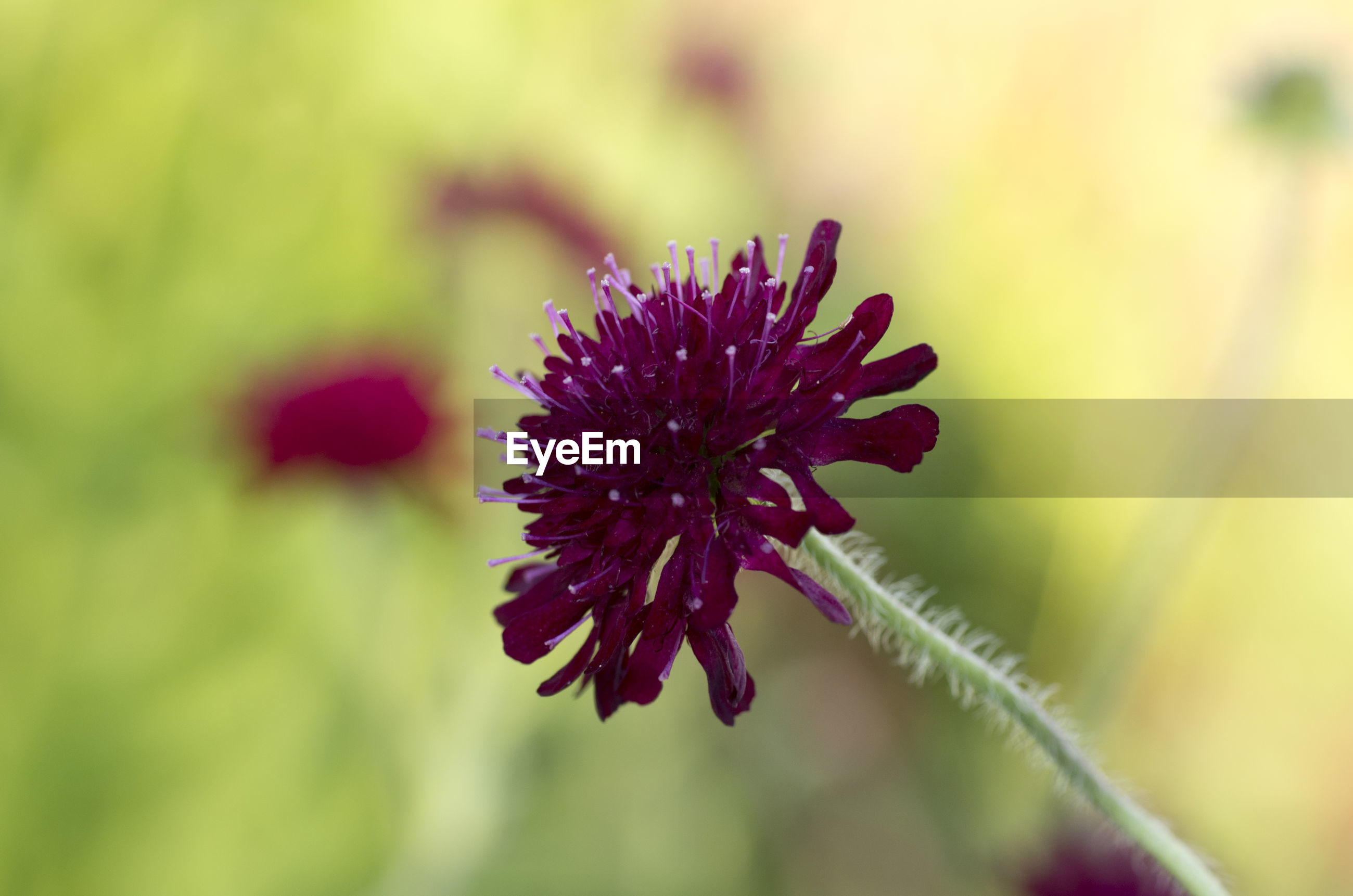flower, nature, fragility, beauty in nature, plant, growth, focus on foreground, no people, freshness, red, day, outdoors, flower head, close-up, blooming